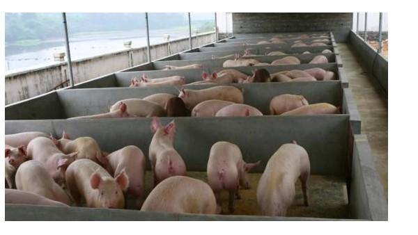 避开这四个养殖问题,让你的养殖场规模越做越大!
